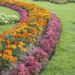 colorful annuals for fall