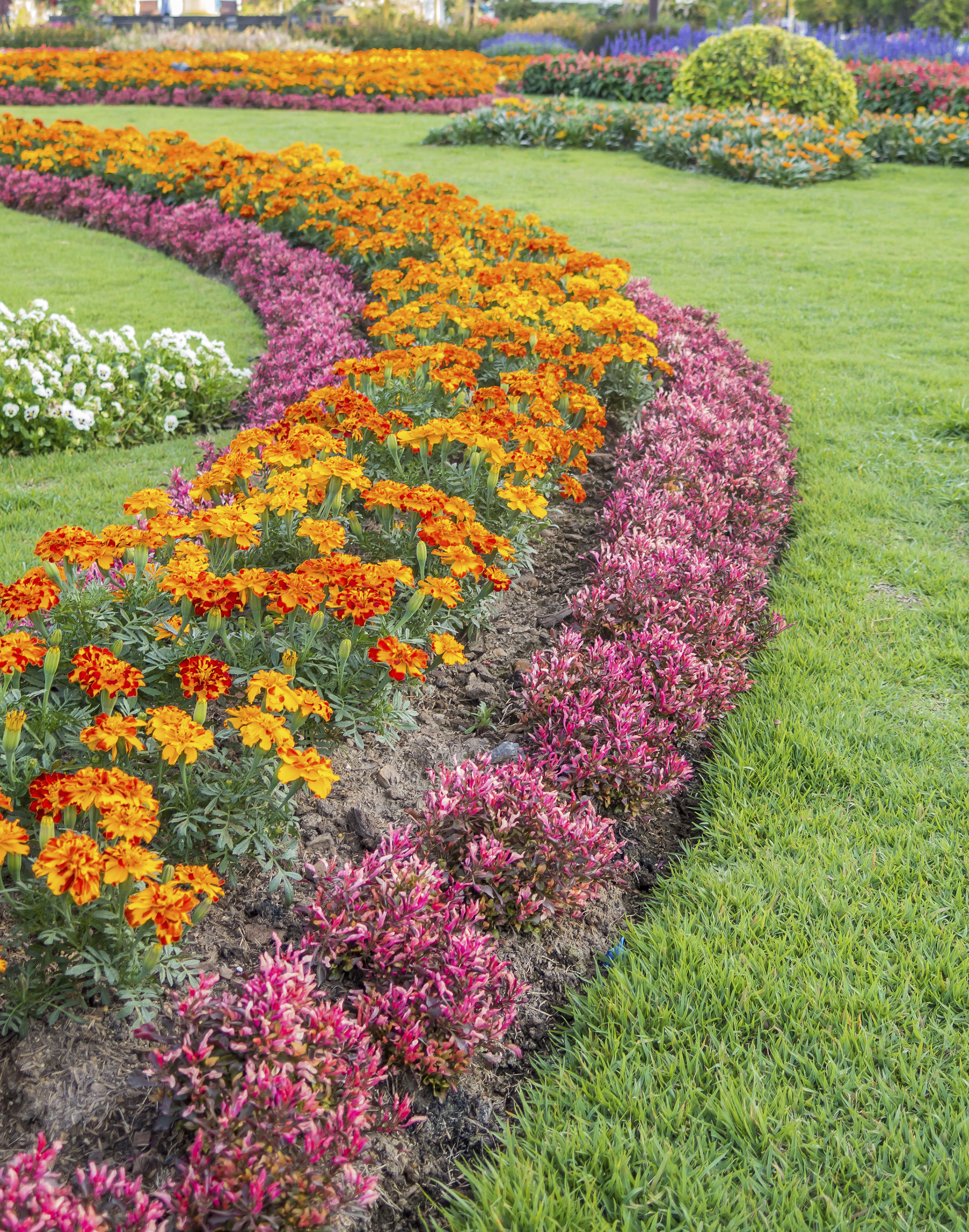 Annuals Add Color Fragrance To Fall Landscapes