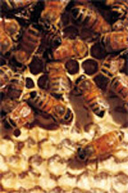 The 22nd Annual Beekeeping Symposium Feb. 4 in Clanton