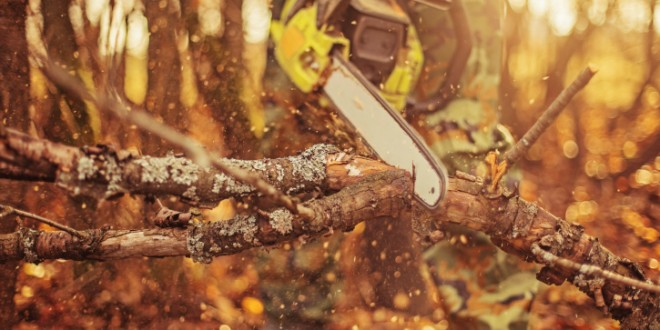 Protect Yourself:  Tips for Safe Chainsaw Use