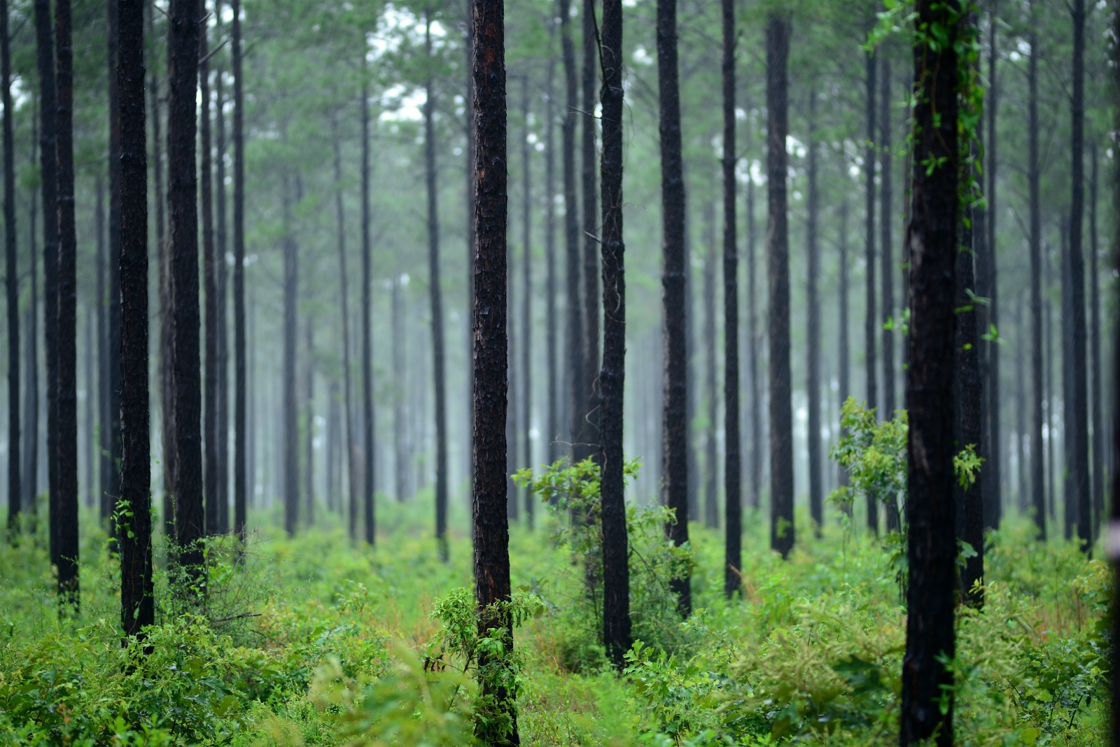 Natural Resources In Alabama