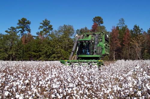 On-Farm Variety Trials:  Helping Farmers Prepare