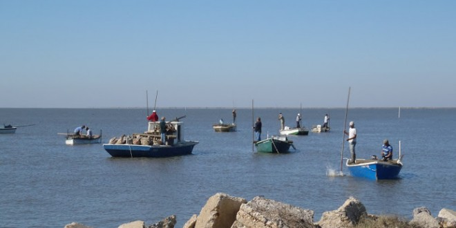 Oyster Farming: A Rising Trend in Alabama