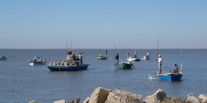 Oyster Farming: A Rising Trend in Alabama