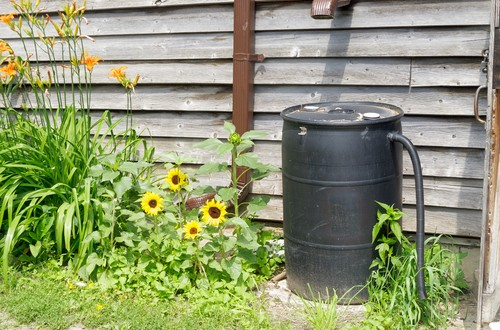 Save Money And Energy Through Rainwater Harvesting
