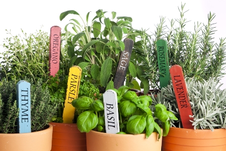 Bring Favorite Herbs To The Backyard U2013 Tips And Tricks For Beginners