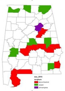 Sugarcane Aphid distribution in Alabama. July 2015.