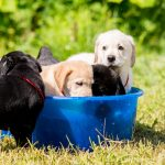 pets hot weather