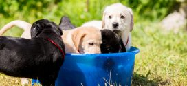 Safeguard Pets in Summer Heat