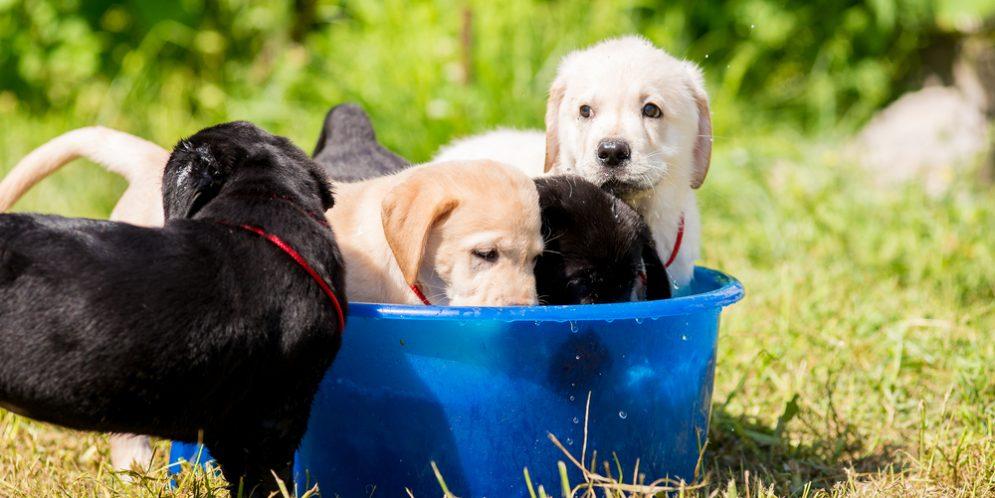 Safeguard Pets in Summer Heat