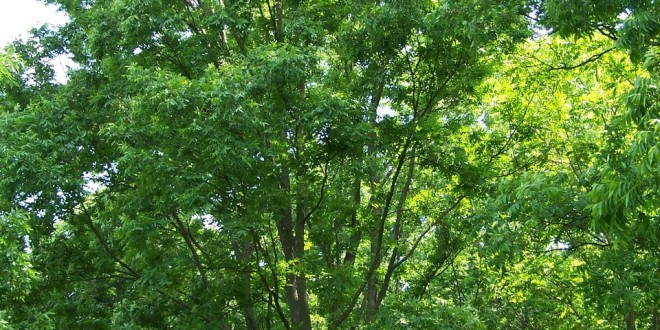 Forests in the City – Why Urban Forestry is Key