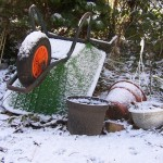 Best Practices for Home Gardens in Winter