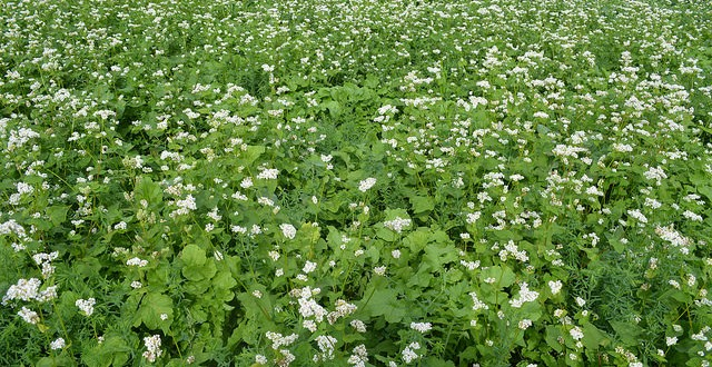 Why Plant Cover Crops?