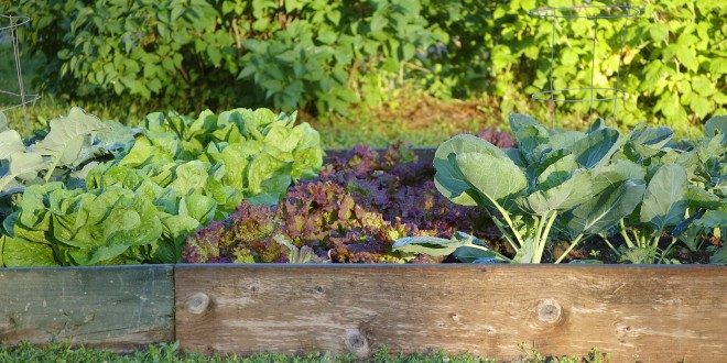 Smart Tips to Become a Successful Gardener