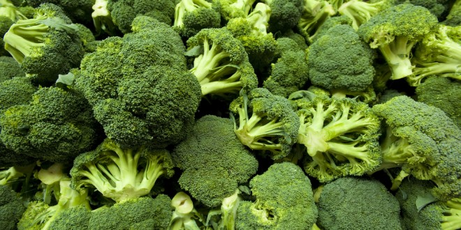 Food Friday:  Broccoli Recipes Keep Diet Healthy and Flavorful