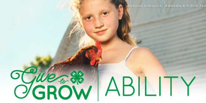 4-H Chick Chain Grows Ability