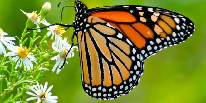 Planting A Butterfly Garden
