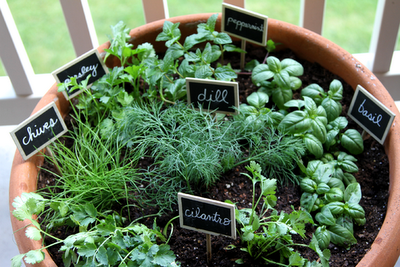 Grow your Own Herbs Extension Daily
