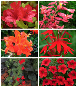 red plant collage