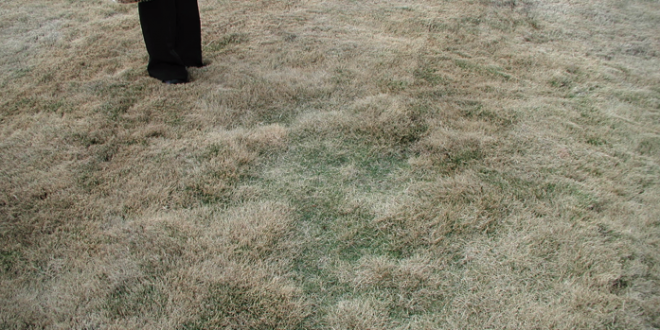 Controlling Thatch in Lawn Turf