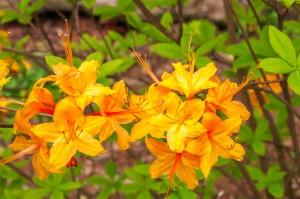 Plant Alabama Native Plants