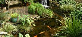Water Gardens Bring Interest to a Yard