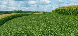 Farmers Fight Low Prices with Diversification, Crop Rotations