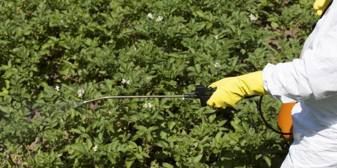 Timely Pest Management Resources for Farm and Garden