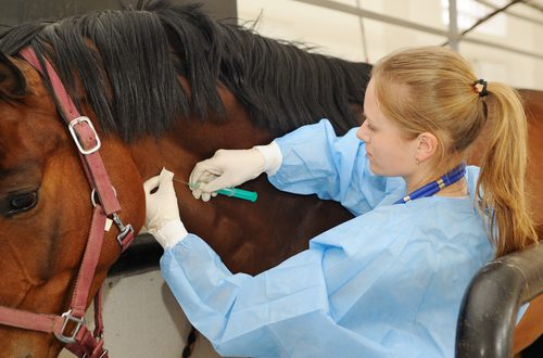 Triple E Virus Deadly to Horses and Humans