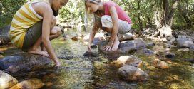 Explore Living Streams with Alabama 4-H Water Watch Workshops