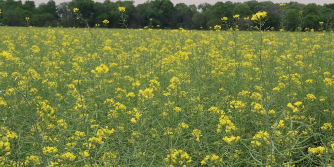 Farmers Utilize Cover Crops