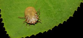 Tick Problems and Organic Control