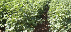 Crop Insect Pests Will Live On After Cold Weather