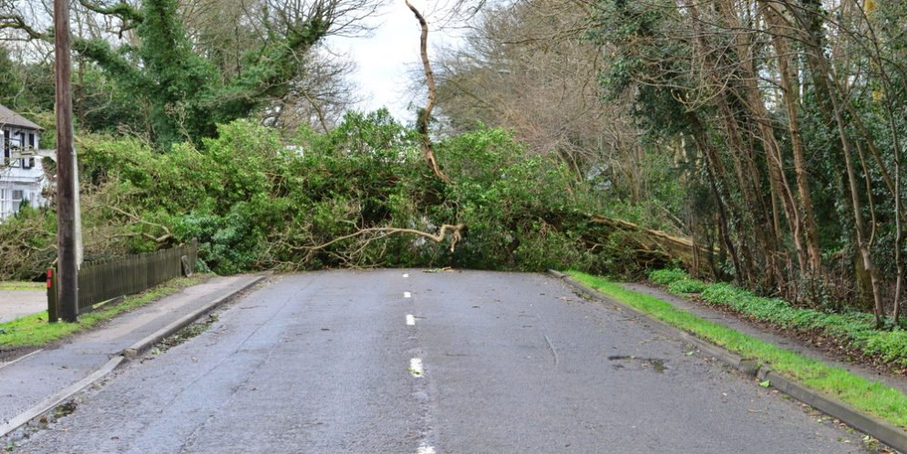 After the Storm: Avoid Downed Trees, Power Lines