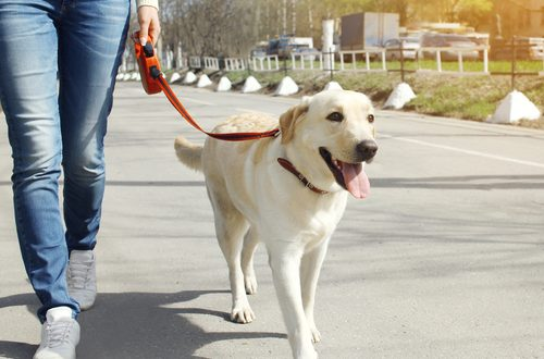Emergency Preparation for Dogs