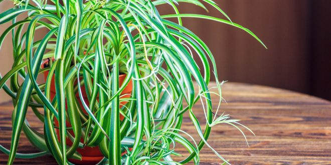 Houseplants That Do Double Duty Clearing Out Pollutants In Indoor Air