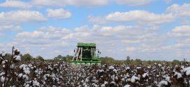 Alabama Cotton Crop Escapes Major Hurricane Damage