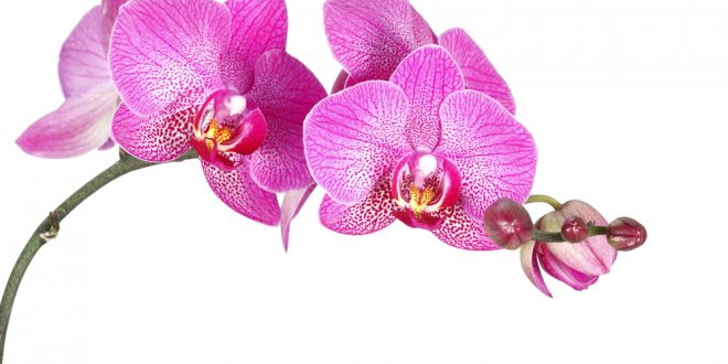 Orchids in The South