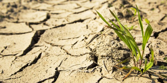 Extension launches new drought website
