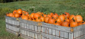 Fall Pumpkin Recipes