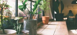 Nurturing House Plants during Winter