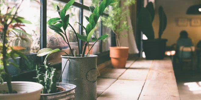 Nurturing House Plants during Winter