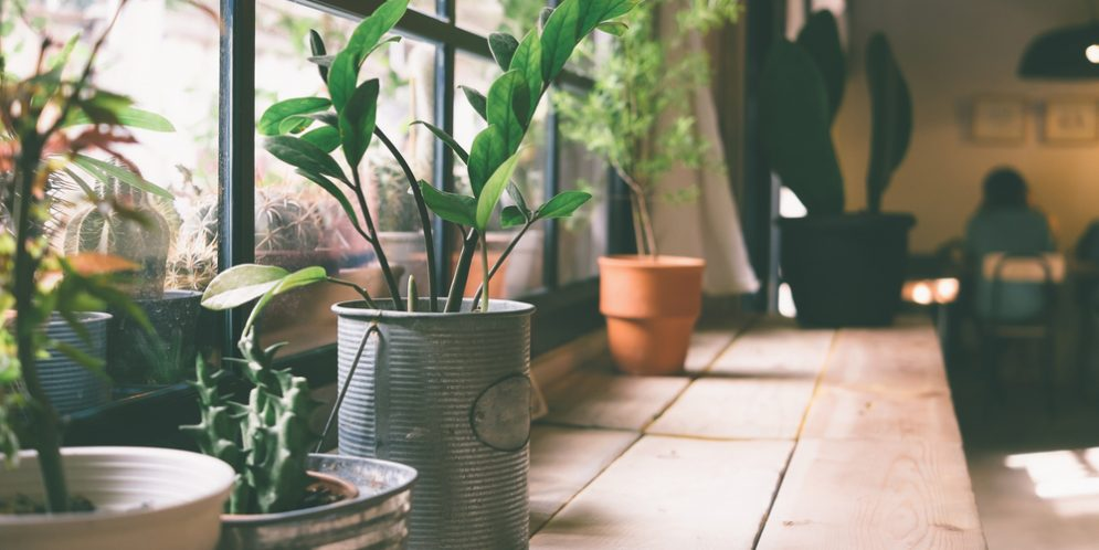 When to take the plants inside