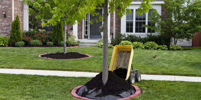 How mulch helps save water