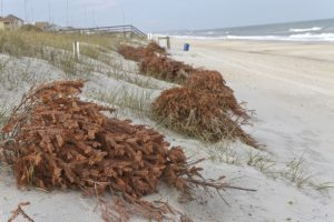 beach-erosion-and-christmas-trees-by-j-bicking-at-shutterstock