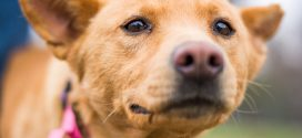 Heartworm Disease: A Hidden Killer