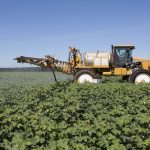 Spraying cotton for stink bugs