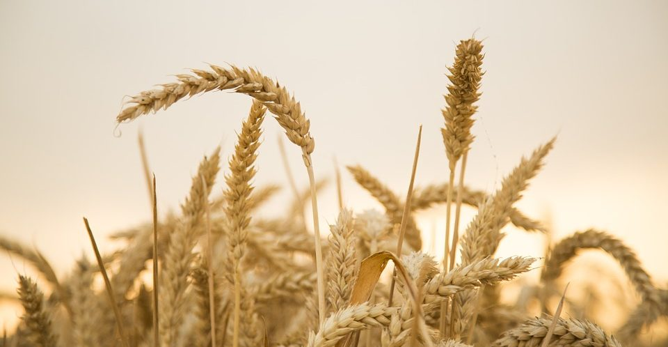 Gluten-Free Lifestyle: Is it Good for our Health?