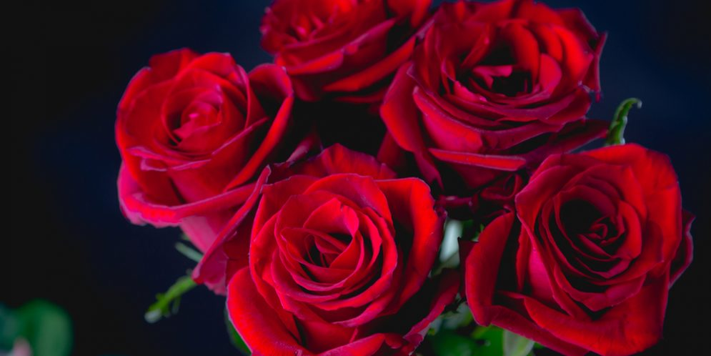 Make Your Valentine's Day Roses Last