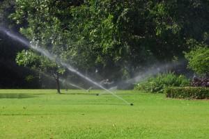 pet friendly irrigation